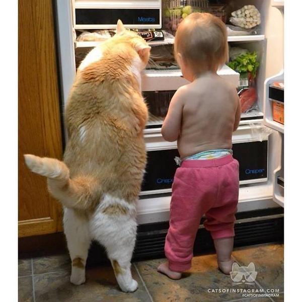 Купить хороший холодильник, что нужно знать.